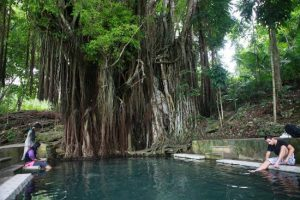 The Enchanted Balete Tree in Siquijor