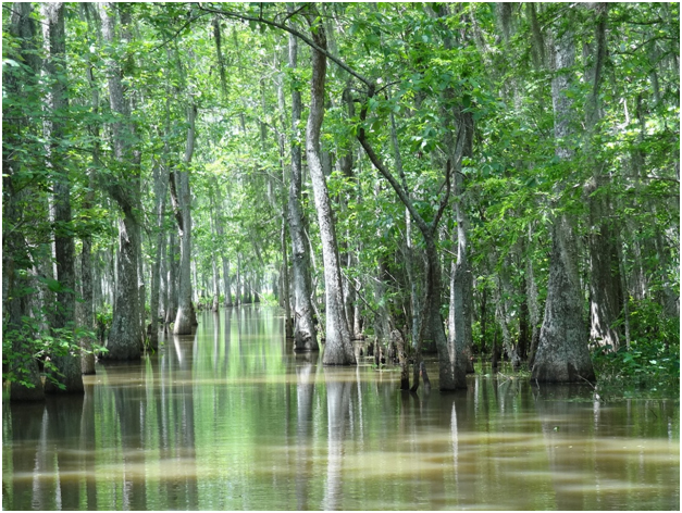 The Bayou Boat Tours